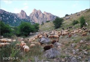 انجمن فرهنگی سادوا » Blog Archive » زیست بوم جانوری در ...